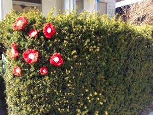 hedge yarnflowers